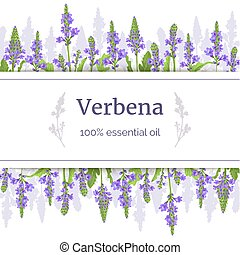 Verbena plant card template with copy space on stripe. Stems. Verbenaceae medicinal herb vector Illustration. For aromatherapy, packaging, cards, perfumery, cosmetics. flowers frame top and bottom.