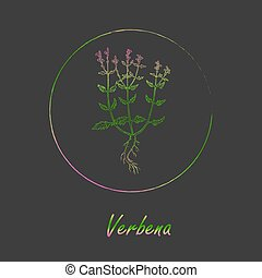 Contour Vervain Plant Colored with Vibrant Gradient and Placed in Round Brush Painted Frame. Verbena Latin Name Colored with Gradient. Dark Grey Background. Label for Traditional Medicine.