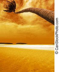 verbuiging, palm, ondergaande zon