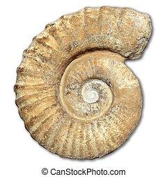 verdadero, aterrorizado, piedra, antiguo, caracol, espiral, ...