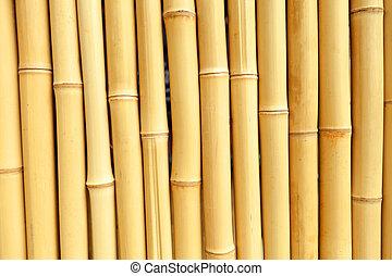 verdadero, bambú, Plano de fondo, textura