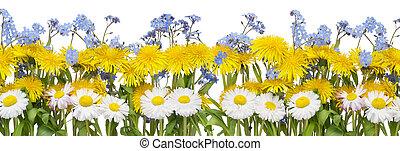 verdadero, flores del resorte, frontera