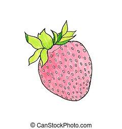 verdadero, illustration., drawing., acuarela, hand-drawn, vector, strawberry., berry.