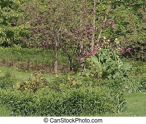 verdant gardenspring tree - Verdant garden vegetation in...