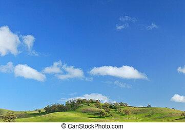 verdant green hillside in spring
