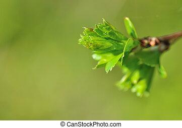 verdant nature - closeup of a bud in verdant leaves in...