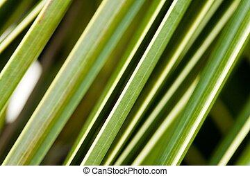 verdant plant
