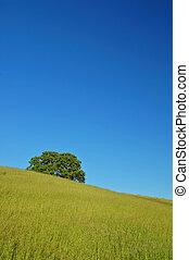 verdant spring landscape - rural springtime landscape