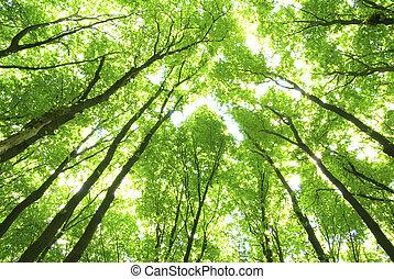 verde, árboles