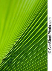 verde, árvore palma, folha, como, um, fundo