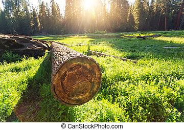 verde, árvore, prado,  cuted, pôr do sol