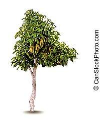 verde, árvore., vetorial