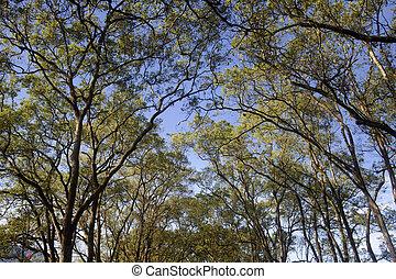 verde, árvores, fundo