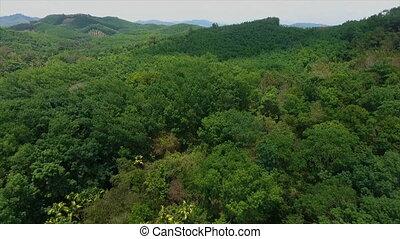 verde, aéreo, floresta, vegetação, vista