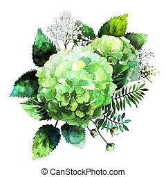 verde, acuarela, hydrangea, viñeta