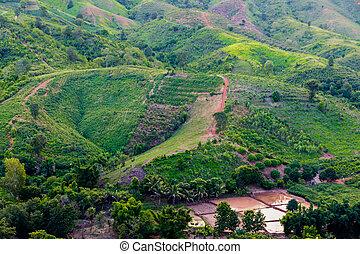 verde, agricultura, campos
