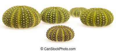 verde, aislado, pilluelos de mar