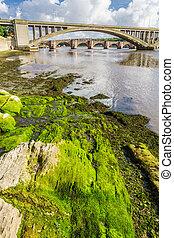 verde, alga, debajo, puentes, en, berwick-upon-tweed