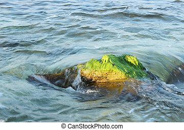 verde, alghe, su, il, roccia
