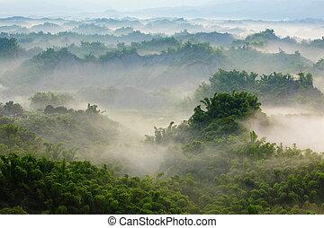 verde, bambú, con, niebla