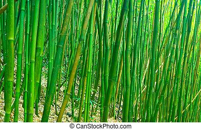 verde, bambu, zen
