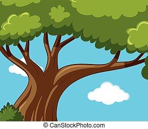 verde blu, albero, cielo