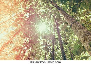 verde, bosque, luz del sol
