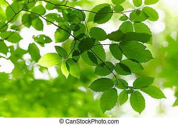 verde, branch.