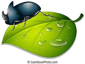 verde branco, folha, fundo, besouro