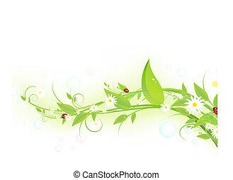 verde, brote, con, camomiles
