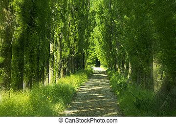 verde, callejón