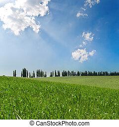 verde, campos, sob, céu nublado