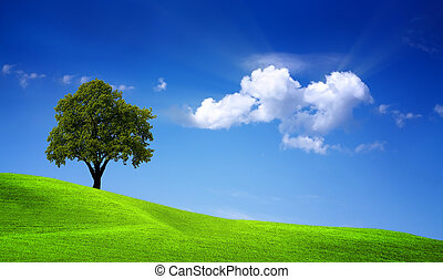 verde, carvalho, campo