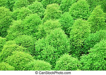 verde, castanha, copas árvore, visto, de cima