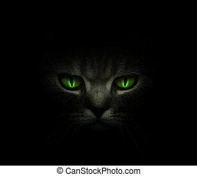 verde, cat\'s, ojos, encendido, en ayunas