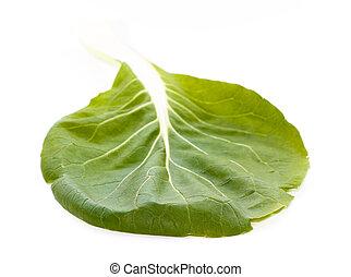 verde, choi de pak, (brassica, rapa), hoja, con, venas
