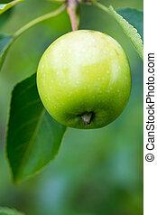 verde, closeup, mele, giallo