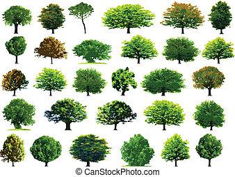 verde, colección, árboles