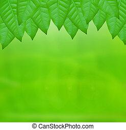 verde, cornice, foglia
