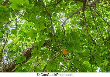 verde, dossel, árvore, experiência.