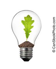 verde, energia, conceito, -, bulbo leve, com, folha carvalho, dentro