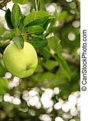 verde, fabbro, mela, nonna
