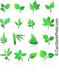 verde, folheia, ícones