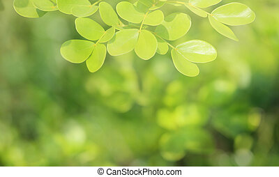 verde, fondo., natural, foco suave