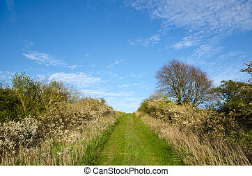 verde, footpath, cima, um, colina