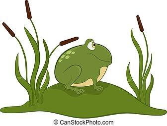 verde, frog.