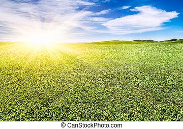 verde, gramado, azul, céu