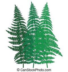 verde, helecho, plano de fondo