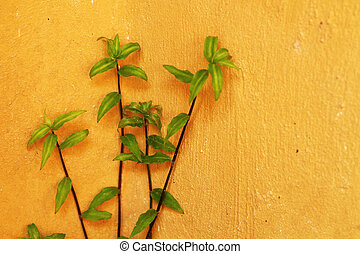 verde, hera, folhas, ligado, parede