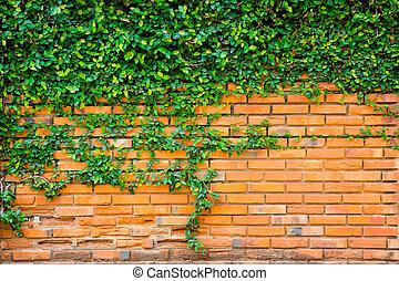 verde, hera, ligado, a, parede tijolo